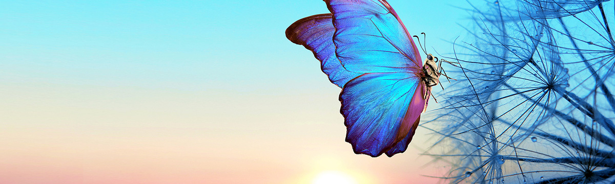 photo of a butterfly landing on a plant at sunrise